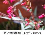 Desert Wildflowers Photographed ...