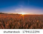 Sunset Over A Majestic Wheat...