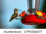 Colorful Hummingbird At Bird...