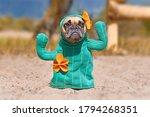 French bulldog dog dressed up...
