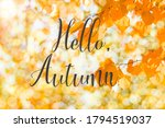 autumn branch with beech... | Shutterstock . vector #1794519037