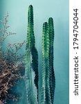 Indoors Desert Garden Cactus...