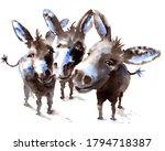 Watercolor 3 Amigos Donkeys...