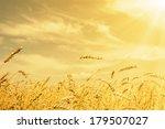 Wheat Ears Under Golden Shinin...