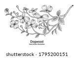 sketch floral decorative set.... | Shutterstock .eps vector #1795200151