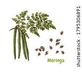 hand drawn colorful moringa... | Shutterstock .eps vector #1795306891