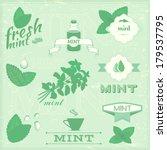 isolated herbs  mint vector... | Shutterstock .eps vector #179537795