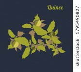 quince branch with fruits and...   Shutterstock .eps vector #1795490827