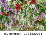 beautiful flowers background.... | Shutterstock . vector #1795530091