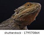 bearded dragon   pogona...   Shutterstock . vector #179570864