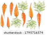 set of watercolor carrots ...   Shutterstock . vector #1795716574
