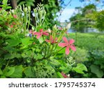 unknown flowers bloomed by a... | Shutterstock . vector #1795745374