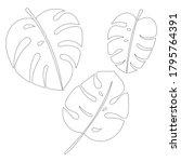 vector jungle leaves set.... | Shutterstock .eps vector #1795764391