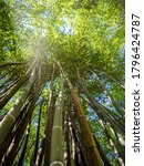 Asian Green Bamboo From Al S...