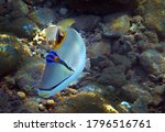 Colorful Exotic Fish With Name...