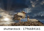 Pair Stork Bird Nest Sky