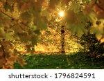 Autumn Background  Tree Branch...