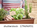 Sage And Rosemary Plants On...