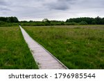 Boardwalk Pathway In Marshland...