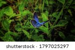 A Butterfly Sits On A Clover...