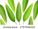 Green mango leaves with white...