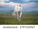 White Horse Run Gallop Against...