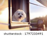 Dog Looking Out Of Motorhome Or ...