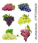 grapes realistic. white and... | Shutterstock .eps vector #1797235624