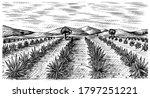 agave field. vintage retro... | Shutterstock .eps vector #1797251221