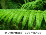 Fern Leaf With Water Drops In...