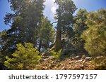 San Bernardino National Forest  ...