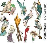 Vector Illustration Of Birds Of ...
