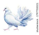 White Dove  Birds On Isolated...