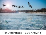 Canadian Geese Over Frozen...