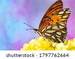 Gulf Fritillary Butterfly Macro ...
