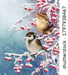 Winter Christmas Festive...