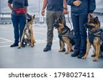 Small photo of Airport security workers with two German Shepherd dogs and Malinois dog guarding territory