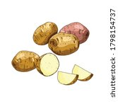 hand drawn colorful potato. set ... | Shutterstock .eps vector #1798154737