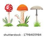 mushroom and toadstool....   Shutterstock .eps vector #1798405984