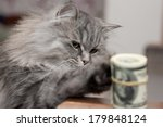 Stock photo cat and money on sofa 179848124