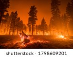 Wildfire Burns Downed Tree In...