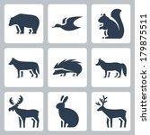 koleksiyonu,geyik,her,faunası,tilki,tavşan,kirpi,boynuz,boynuzlu,geyik,sincap,geyik,kurt