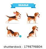 cute beagle dog animal pet with ... | Shutterstock .eps vector #1798798804