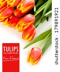 Beauty Red Tulips And Isolated...