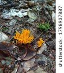 Woodland Yellow Coral Fungus...