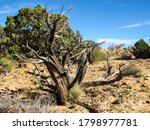 The Dry Skeletal Remains Of A...
