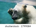 A Polar Bear Under Water Waving