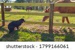 Bernese Mountain Dog Encounter...