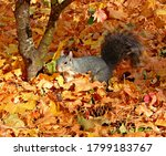 Critter In The Leaves   A...
