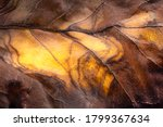 Dry Leaf Surface Texture In...
